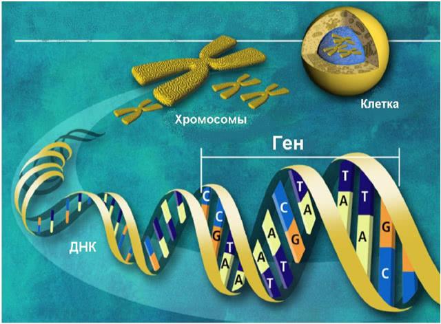 Секвенирование ДНК нового поколения NGS в Киеве в